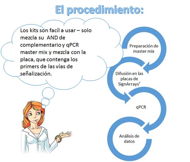 signarrays-procedimiento