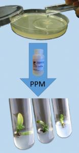 ¿Qué ventajas tiene PPM contra los antibióticos?