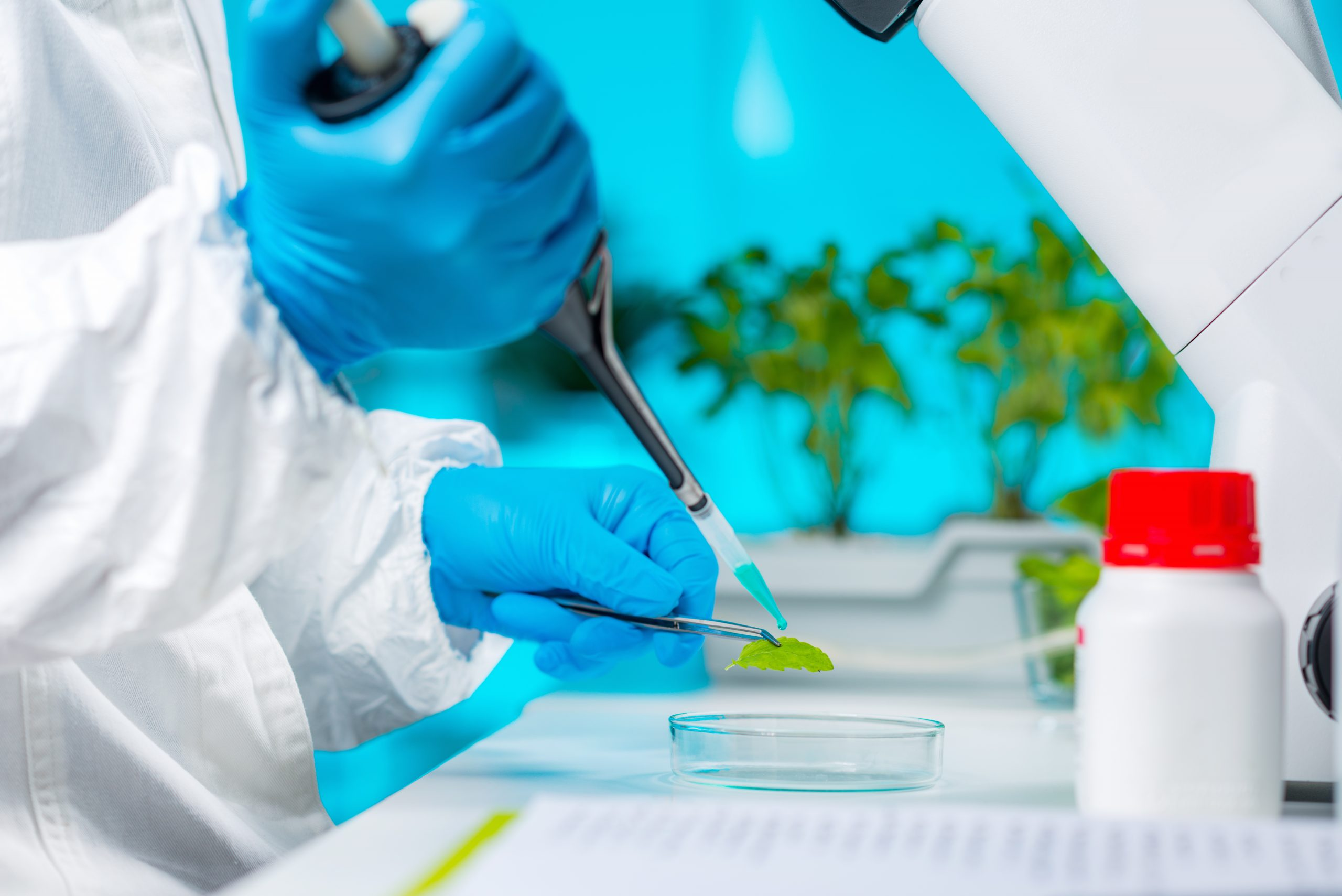 genetica-vegetal-metodos-de-prueba-genetica-y-beneficios-biologos-que-examinan-muestras-genetica-vegetal