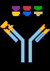 anticuerpos-neutralizantes